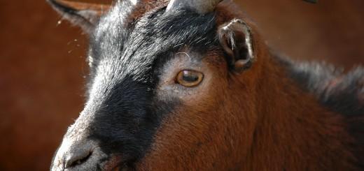 羊年吉祥話新年賀詞 | 羊年新年祝賀詞2015